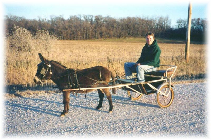 Uses For Miniature Donkeys | Sunny G Acres