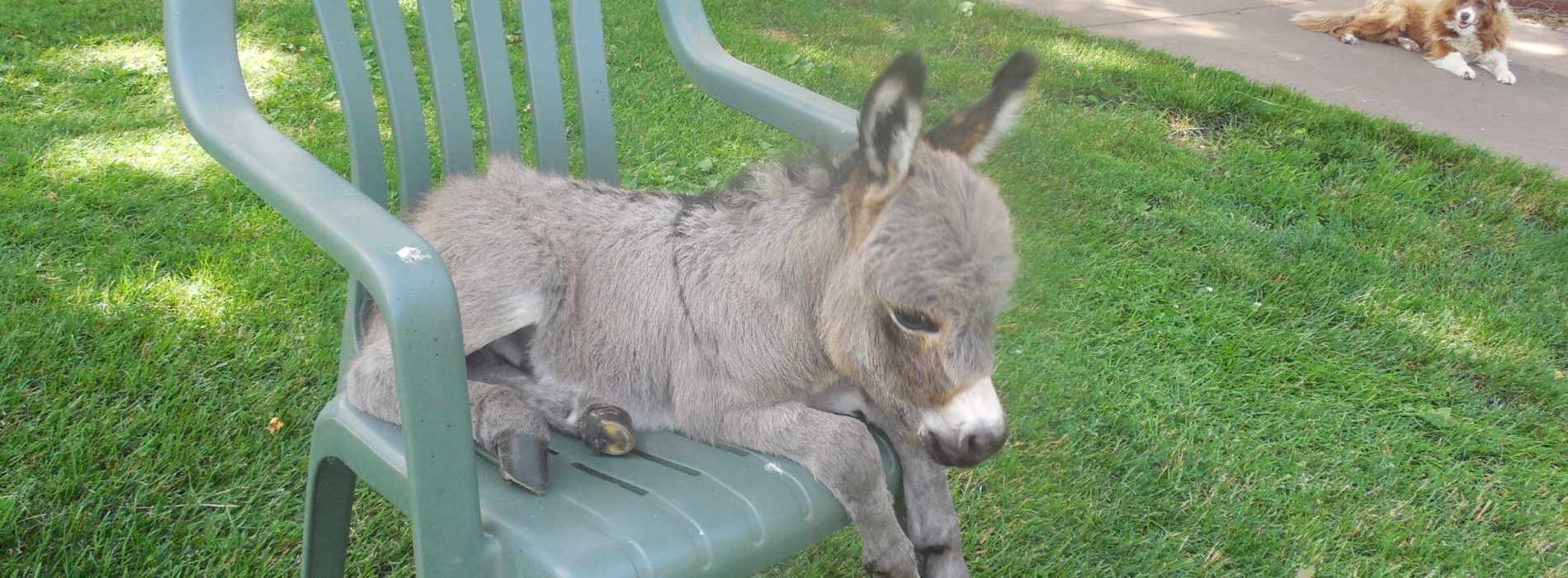 Sunny G Acres: Miniature Donkeys and Micro-Mini Donkeys