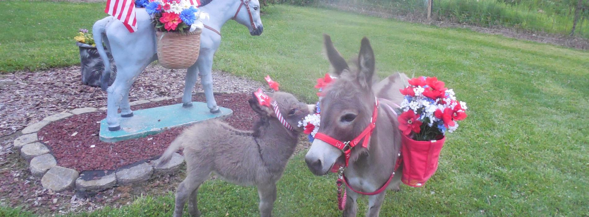 Sunny G Acres: Miniature Donkeys and Micro-Mini Donkeys